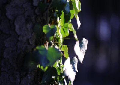 Borkenkäferpfad in Ilsenburg