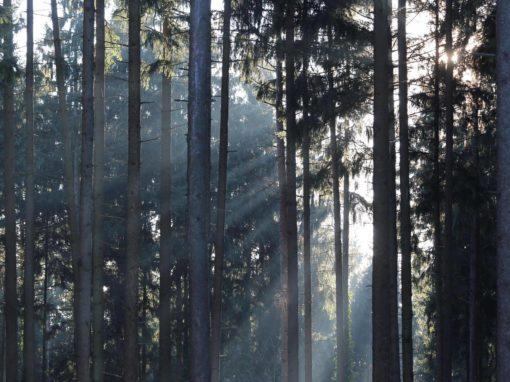 Walderlebnispfad Goslar